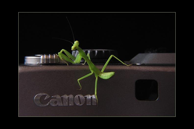 IMAGE: http://www.kleptography.com/dl/fm/canon_mantis640.jpg