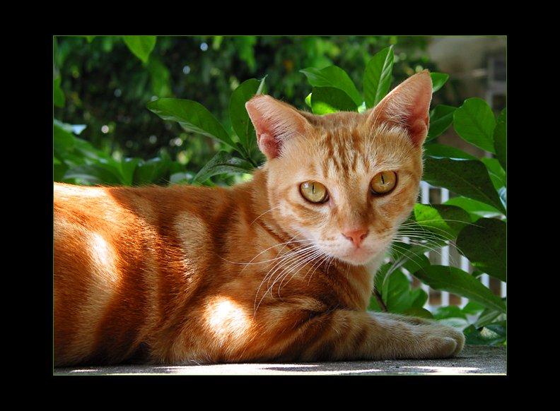 IMAGE: http://www.kleptography.com/dl/fm/cat_sun.jpg