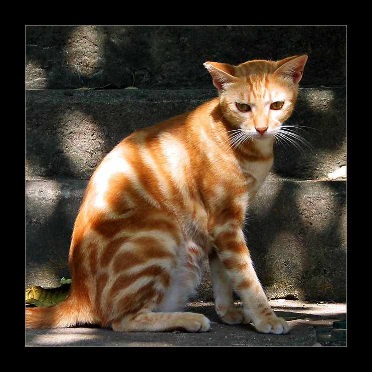 IMAGE: http://www.kleptography.com/dl/fm/cat_sun2.jpg