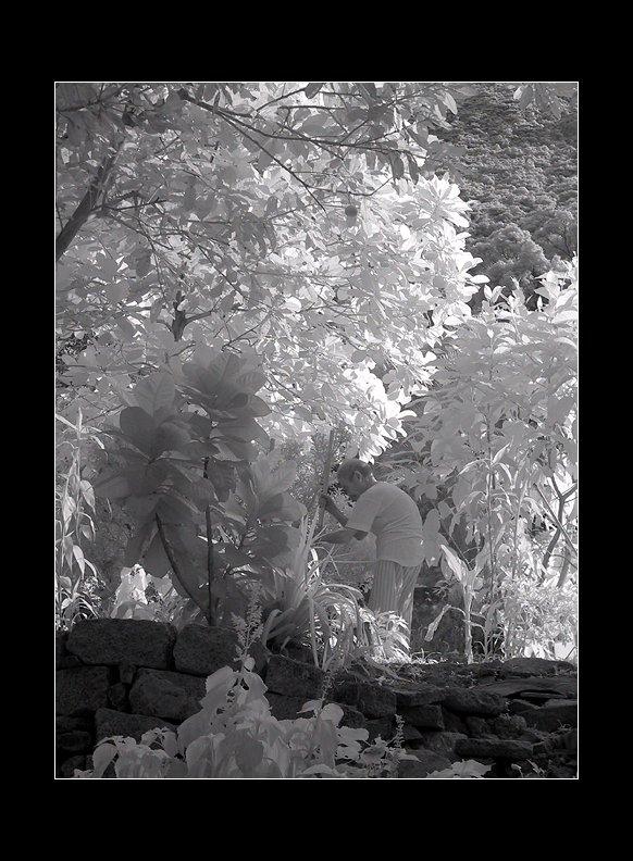 IMAGE: http://www.kleptography.com/dl/fm/gardener640.jpg