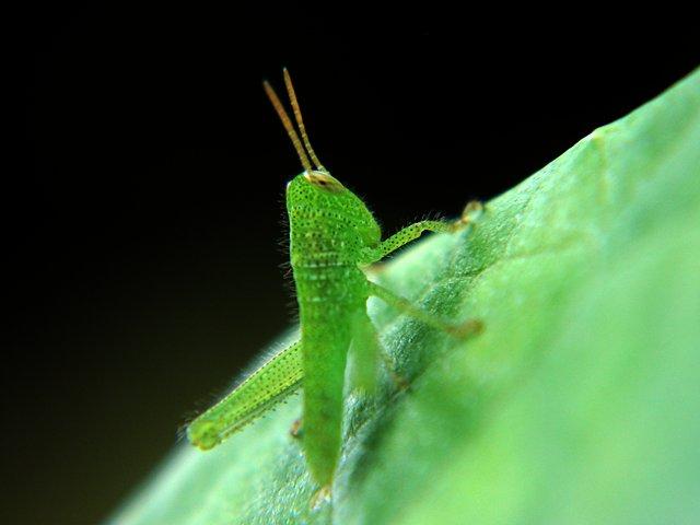 IMAGE: http://www.kleptography.com/dl/fm/grasshopper.jpg