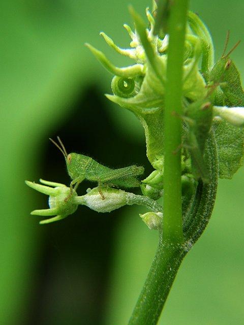 IMAGE: http://www.kleptography.com/dl/fm/grasshopper3.jpg