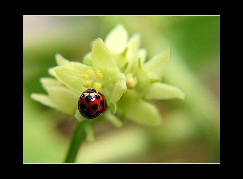 IMAGE: http://www.kleptography.com/dl/fm/ladybugs.jpg
