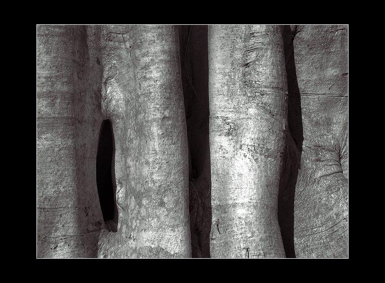 IMAGE: http://www.kleptography.com/dl/fm/tree640.jpg